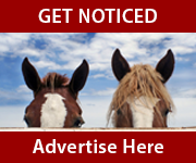 Get Noticed (Leicestershire Horse)