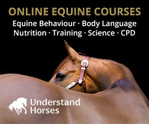 Understand Horses (Leicestershire Horse)